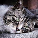 栗原類が今夜くらべてみましたで猫好き!父親他界の理由と現在は?