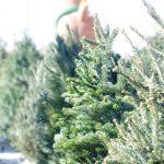 イケア・クリスマスツリー2016の発売日はいつから?在庫切れに注意!