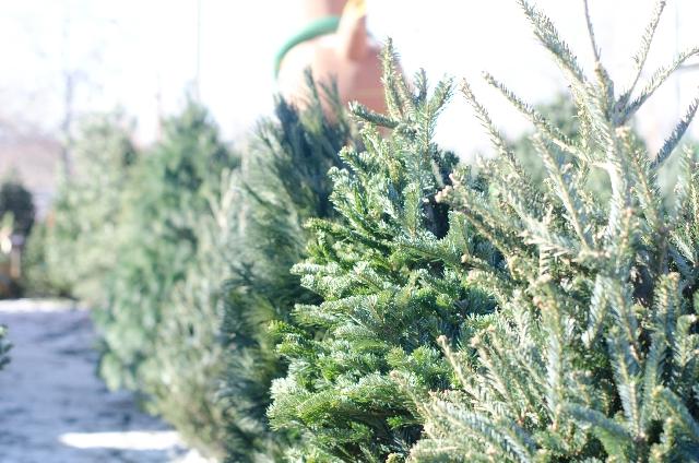 イケア クリスマスツリー