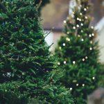 イケアの生木・クリスマスツリー購入ガイド!選び方や持ち帰り可否等